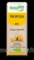 Herbalgem Propolis Large Spectre Solution Buvable Bio Fl Cpte-gttes/15ml à Bergerac